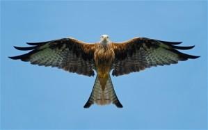 bird-of-prey_2372049b
