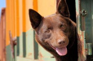 red-dog-764567968-168755