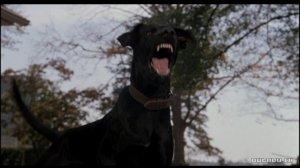 the-amityville-horror-dog1